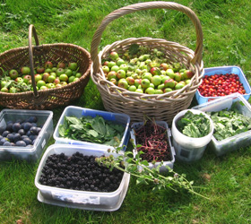 Food Foraging with Hedgerow Harvest image
