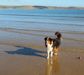 Dorset with your Dog