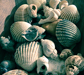 Shell Crafts from Dorset's Beaches image